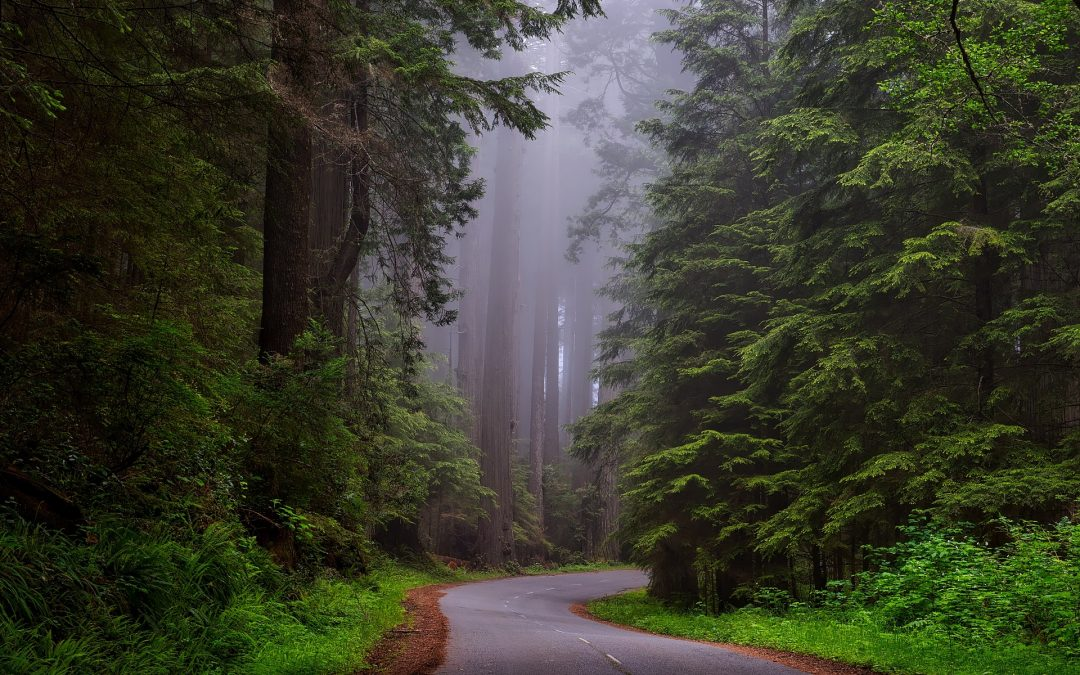 California Redwoods and Your Congregation